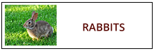 Rabbit Removal in PA